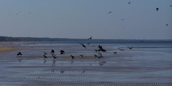 Playa de Jurmala, la más turística de Letonia, en aguas del mar Báltico