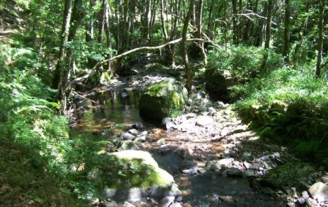 Río Agüeira remontándolo hacia la Seimeira