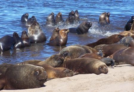 Lobos marinos descansando junto a la Escollera Sur