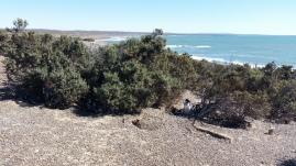 Madrigueras en Punta Tombo