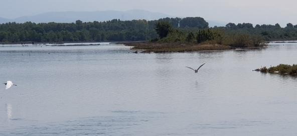 Pájaros sobrevolando la Laguna e Patokut