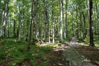 Bosque de Biogradska Gora