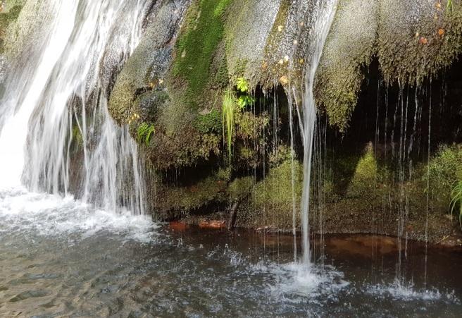 Detalle de la caída de agua de la cascada de Morlongo sobre el lecho de vegetación que cubre la roca por la sempiterna humedad