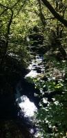 El río Infierno, tapado por la vegetación