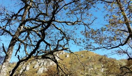 El cielo azul entre los árboles desnudos de otoño en la ribera del río Infierno
