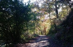 Árboles y sombras en la ruta del río Infierno, Piloña