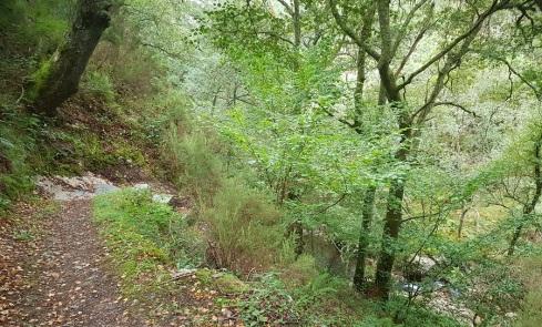 Inicio de la senda de bajada a la cascada de Morlongo, ya con el río a la vista