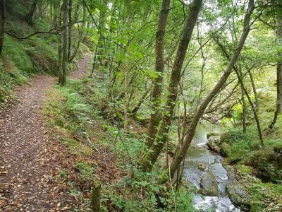 Árboles buscando la luz con ramas horizontales entre la senda de la cascada de Morlongo y el río Vilanova