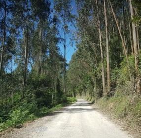 Carretera entre árboles hacia la playa del Sable, ría de Tina Menor, Cantabria