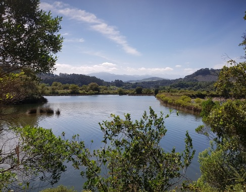 Zona pantanosa del Nansa en su ensanchamiento para desembocar en la ría de Tina Menor