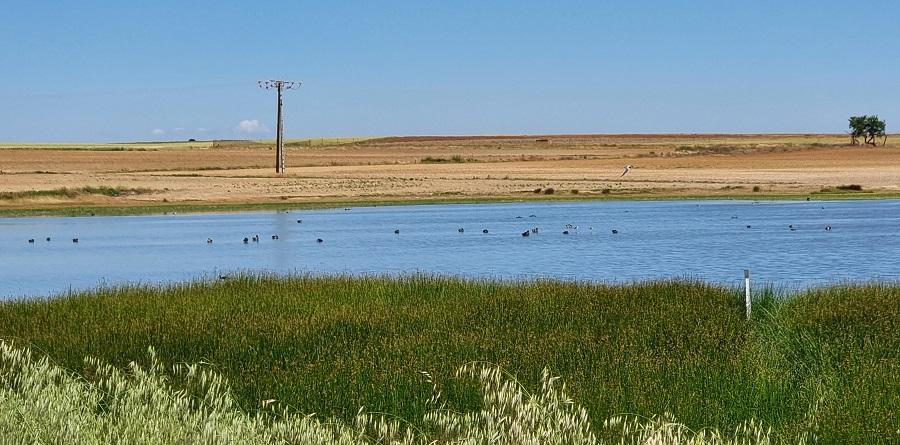 Aves en la Laguna de San Pedro desde el mirador
