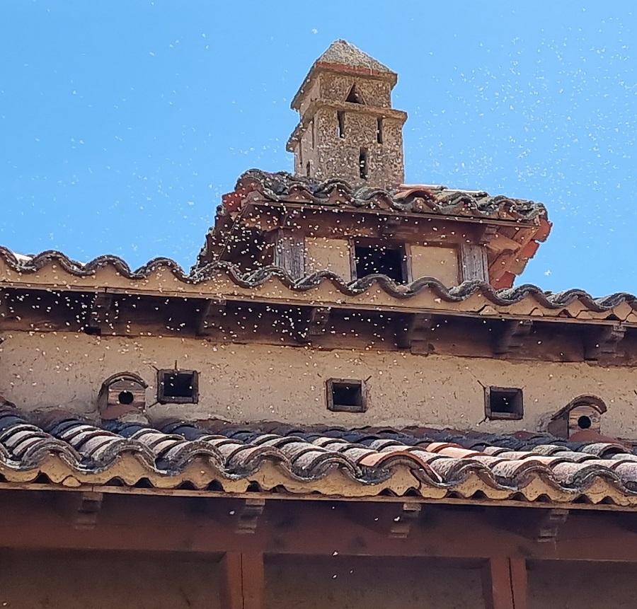 Detalle de las bandadas de insectos en torno al mirador de Otero de Sariegos
