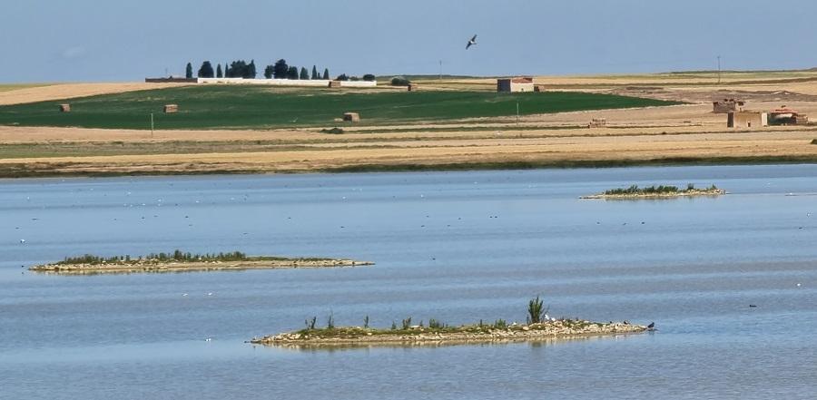 Aves en la Laguna de Salina Grande, Villafáfila, Zamora
